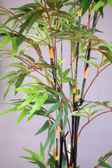 Coco's Plantation 6' Japanese Bamboo Tree - Casa Febus - Home • Design