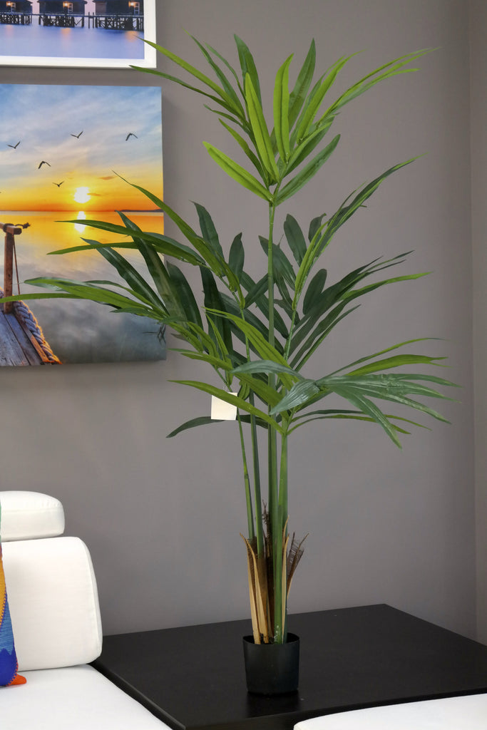 Coco's Plantation 5' Kentia Palm in Pot - Casa Febus - Home • Design