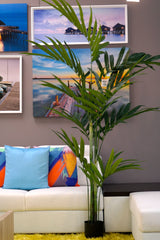 Coco's Plantation 7' Kentia Palm in Pot - Casa Febus - Home • Design