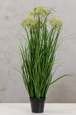 Coco's Plantation Heads Lace Flower Grass w/p - Casa Febus - Home • Design