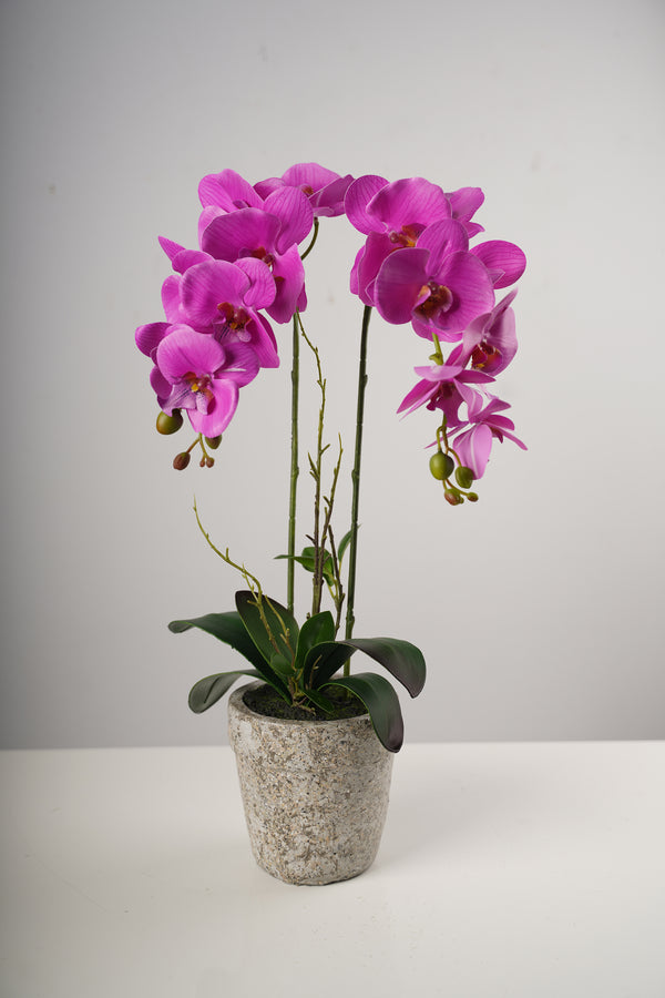 "26"" LG Single Fuschia Beauty Orchid on Cement Pot-Belleza Collection"