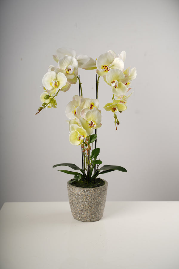 "26"" Triple Natura Giant Beauty Orchid on Cement Pot-Belleza Collection"