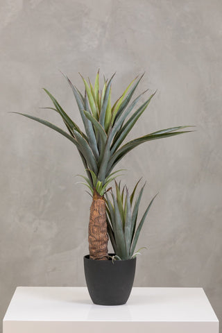 "32"" Pineapple Plant in Pot Too - Coco's Plantation"