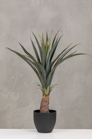 "30"" Pineapple Plant in Pot Too - Coco's Plantation"