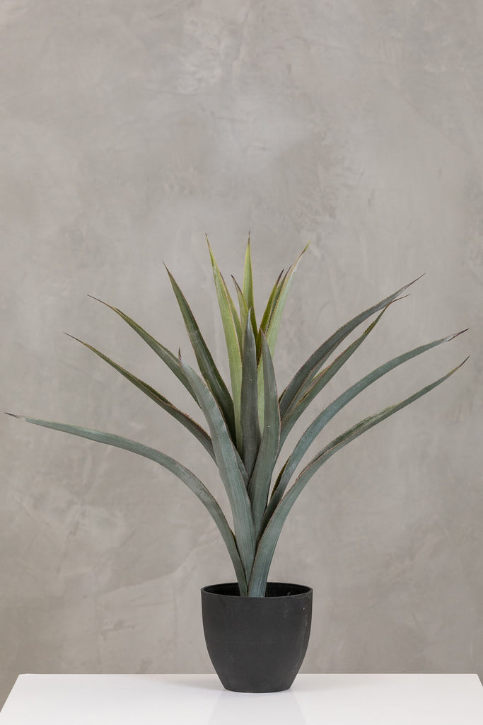 "26"" Pineapple Plant in Pot - Coco's Plantation"