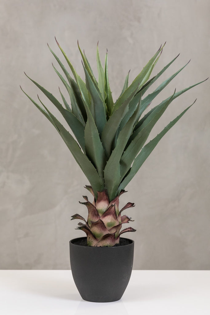 "28"" Pineapple Plant in Pot - Coco's Plantation"