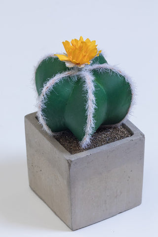"9"" Single Yellow Flower Cactus on Pot - Cacti Collection - Casa Febus - Home • Design"