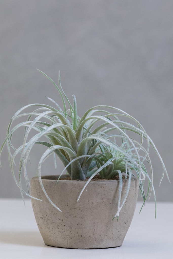 "9"" Flocking Air Plant on Pot - Cacti Collection - Casa Febus - Home • Design"