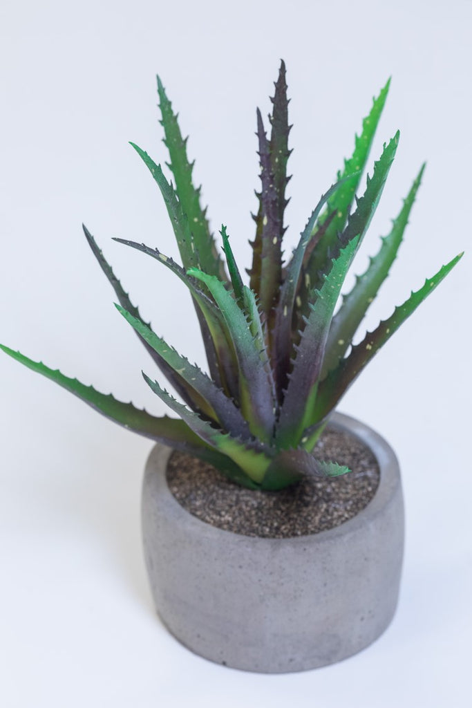 "10"" Brown Aloe Plant on Pot - Cacti Collection - Casa Febus - Home • Design"