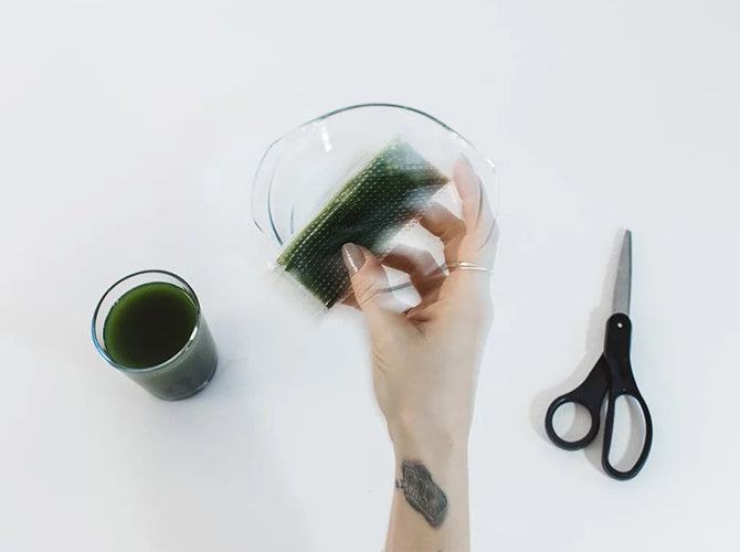 Wheatgrass juice being removed from thawing container