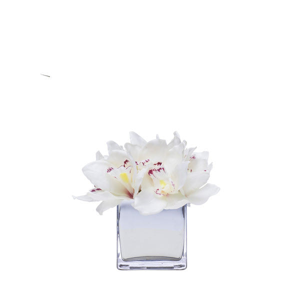 CREAM CYMBIDIUM IN MIRROR CUBE
