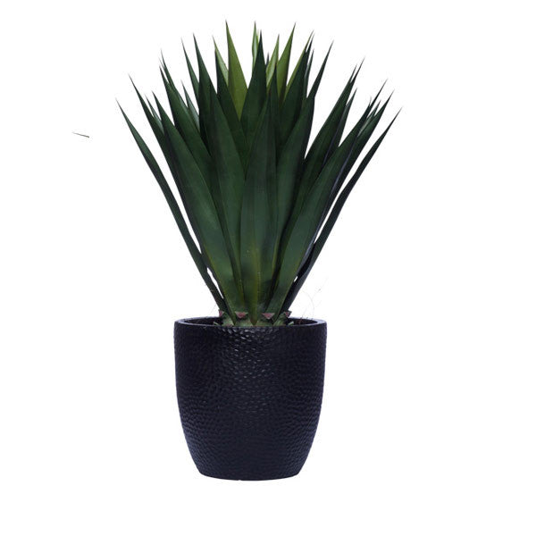 AGAVE IN BLACK POT