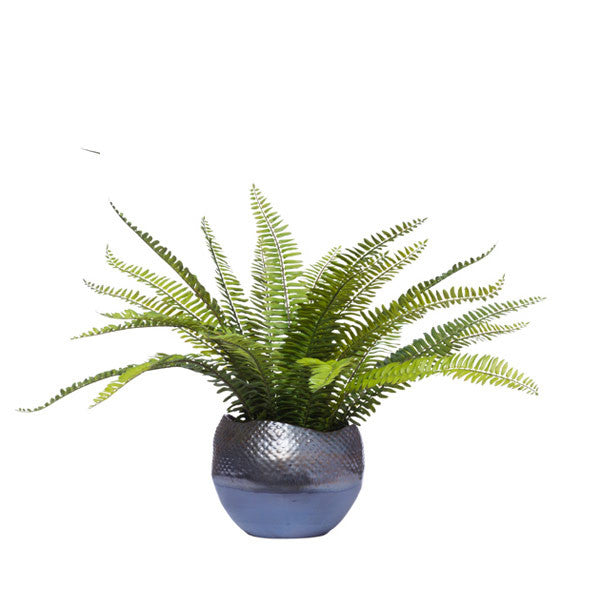 BOSTON FERN IN BRONZE POT