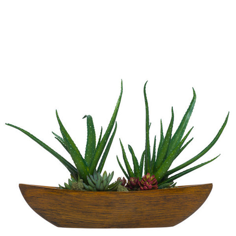 Aloe/Succulent in Small Brown Boat