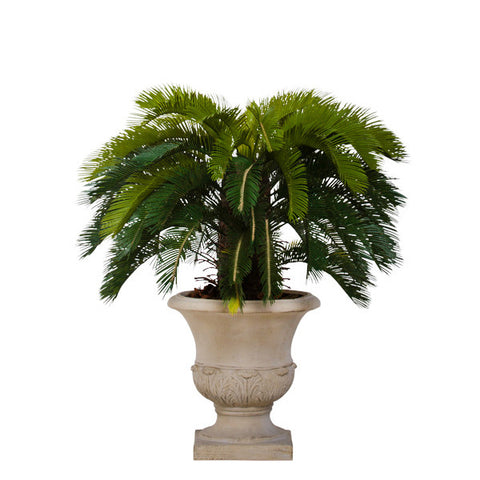 Cycas Topiary in Beige Classic Urn