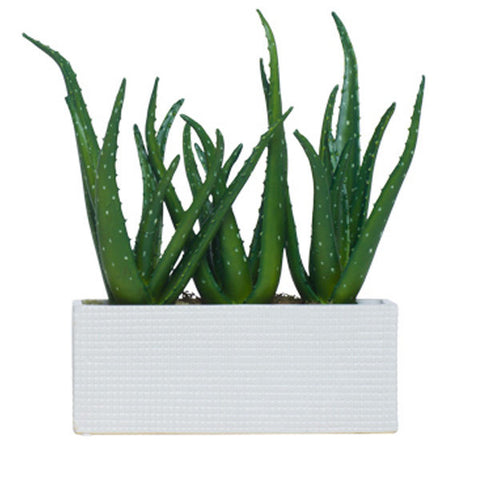 Aloe in Low White Rectangle