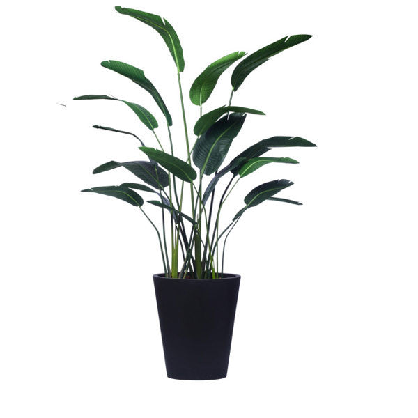8' TRAVELERS PALM IN BLACK OVAL POT