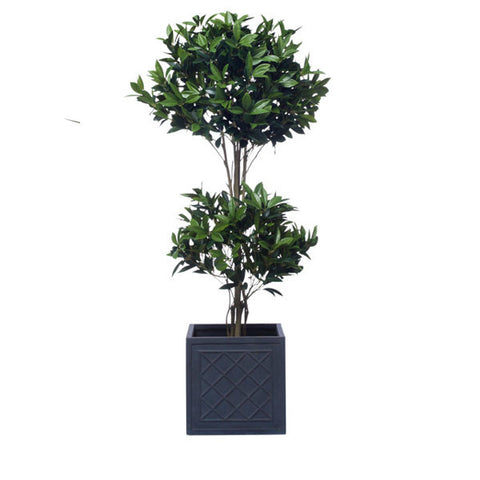 5' DOUBLE LAUREL TOPIARY/BASKET