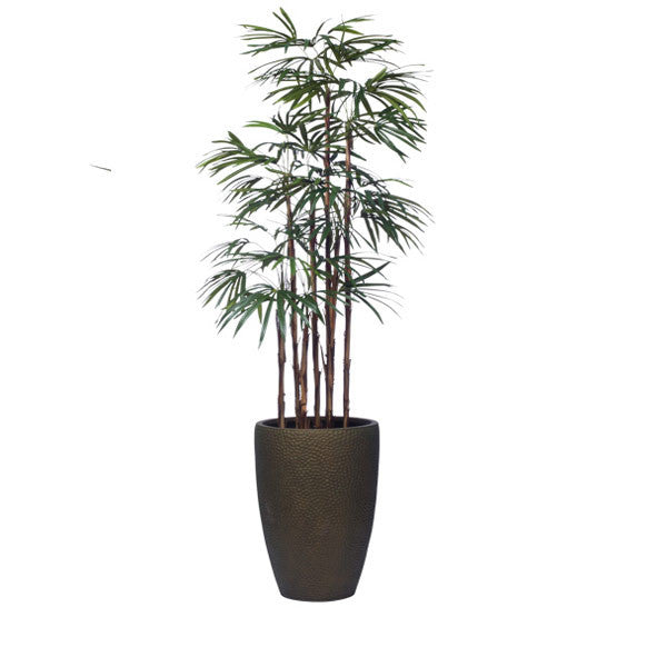 7' LADY FINGER PALM IN TALL BRONZE DIMPLED POT