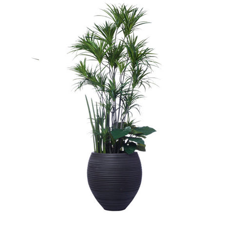 10' DRACENA COMBINATION IN LRG HONEY POT