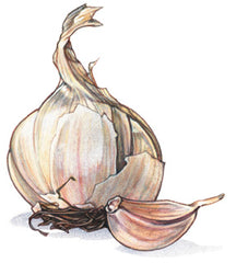 Gourmet & Heirloom Mix Garlic Bag - Pick up or shipped COD