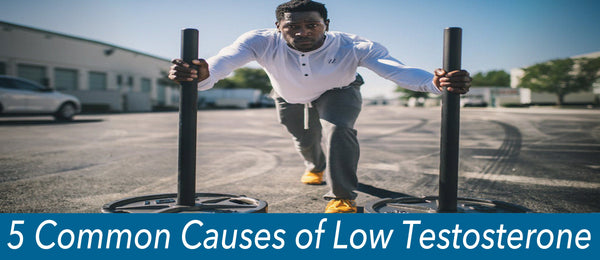 5 Common Causes of Low Testosterone - Gentech Nutrition