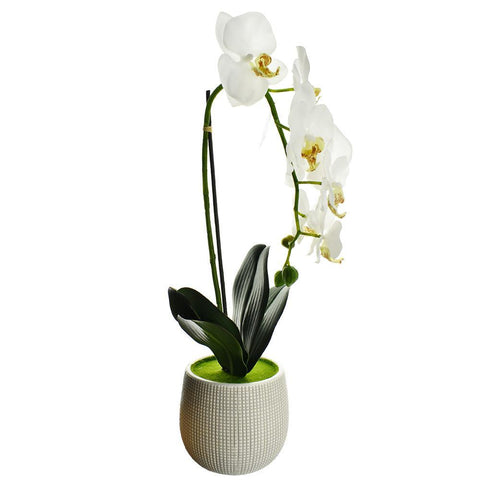 Artificial Moth Orchid with Round Pot, 20-Inch