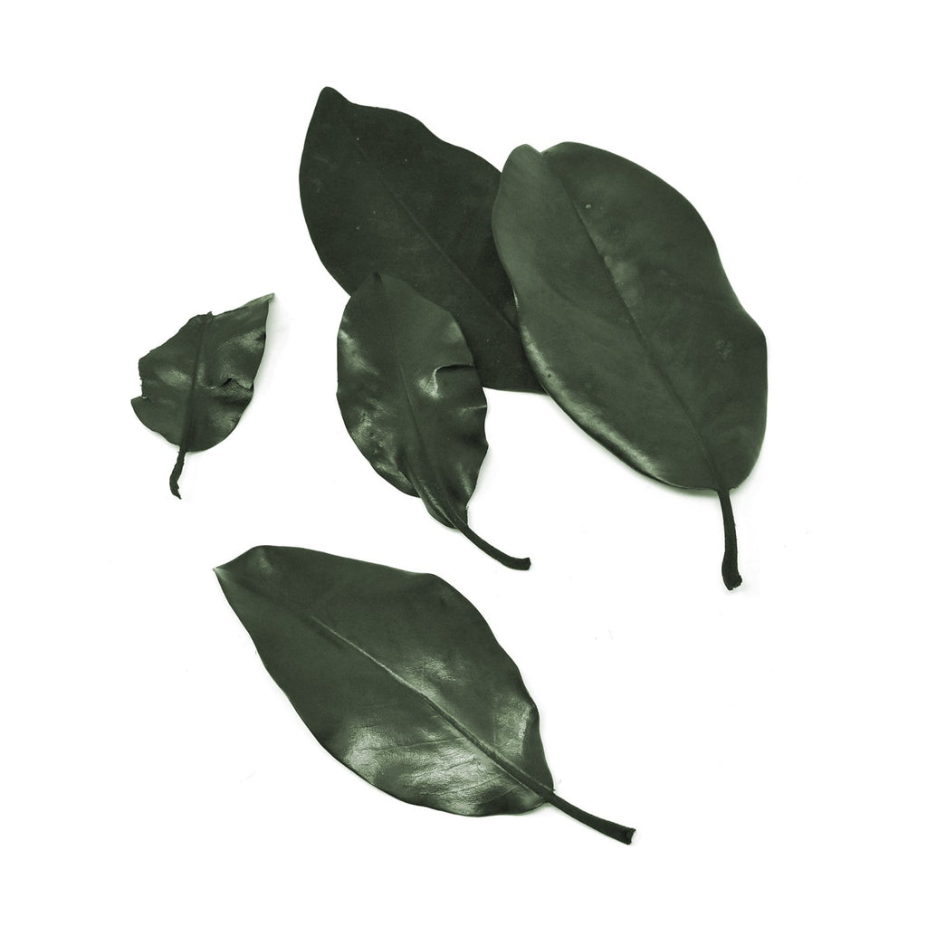 Naturally Preserved Magnolia Leaves, Green, 5-Piece