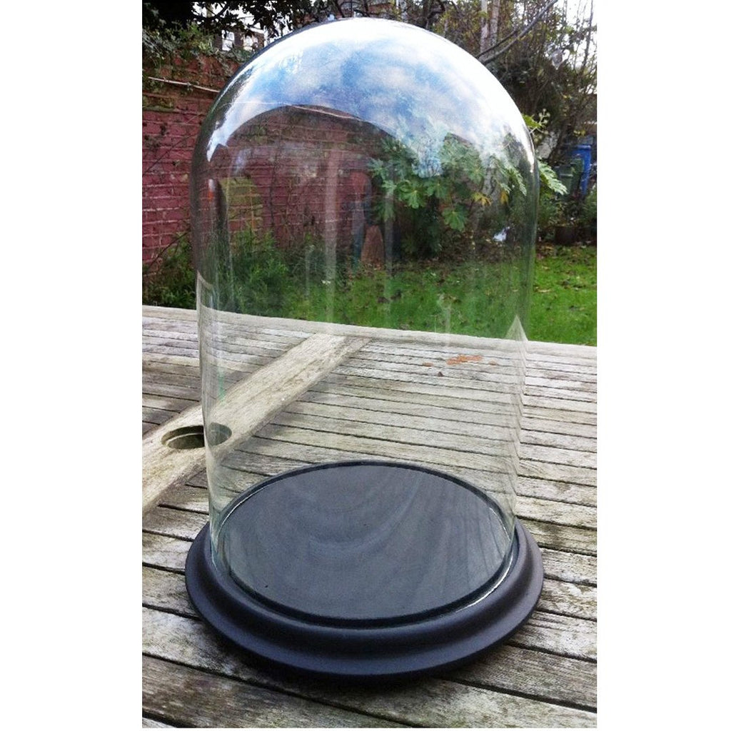 Large Glass Dome Display Case Centerpiece, Black Base