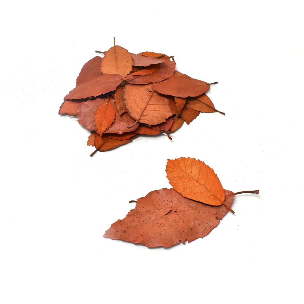 Preserved Autumn Leaves Bowl Filler, Orange, 4-Ounce