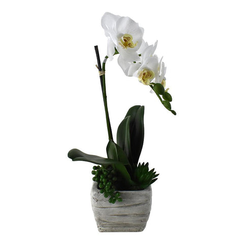Artificial Phalaenopsis Moth Orchid in Pot, 15-1/2-Inch