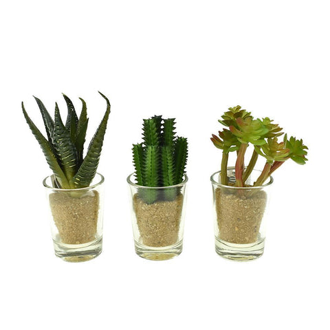 Artificial Assorted Cacti in Glass Planters, 4-Inch, 3-Piece