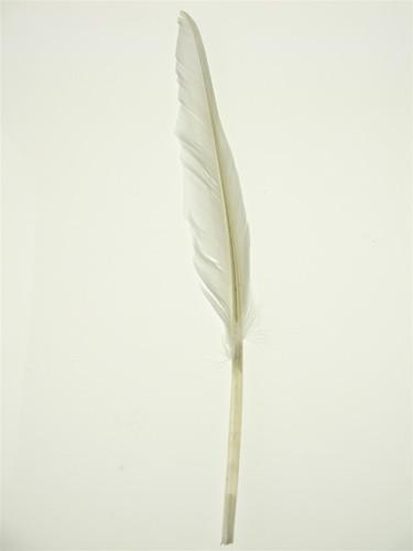 Duck Feather Decorative, 14-inch, 10-Piece, White