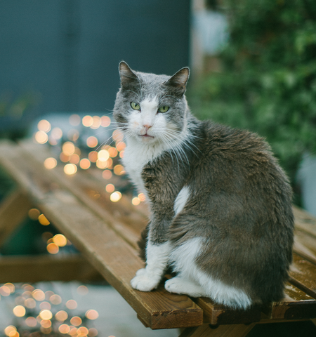 Who Knew That Cats Are Their Protectors >> Cat Stories Shoko