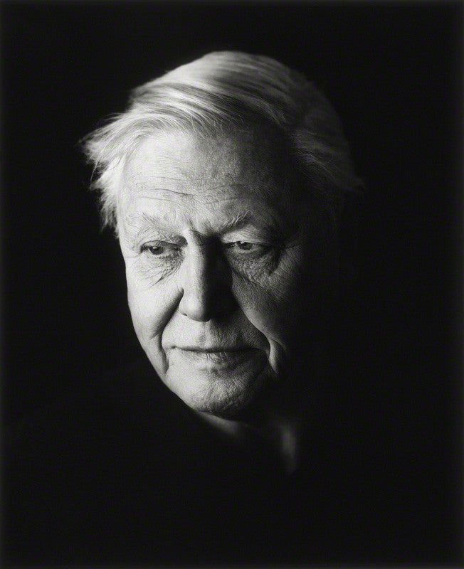 Sir David Attenborough NPG P1296 Portrait Print