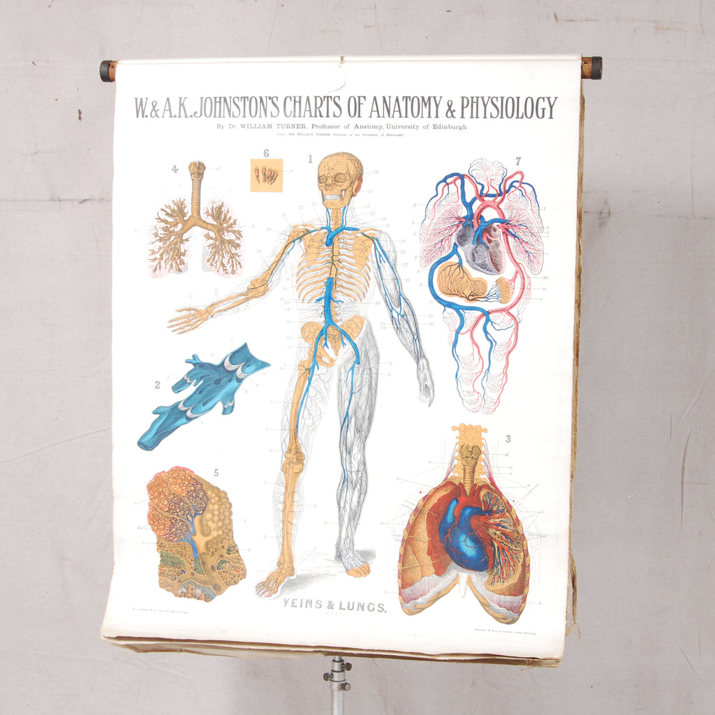 Early 20th Century W Ak Johnstons Charts On Anatomy Physiology