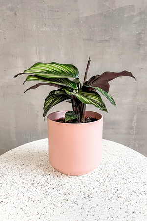 Accent Decor Kendall Pot in Blush