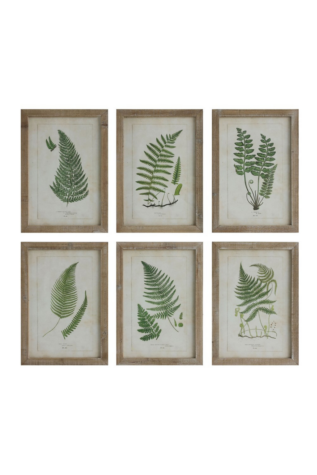 Creative Co-Op Wood Framed Fern Wall Decor