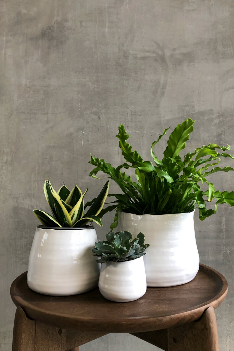 Accent Decor Tegan Pot