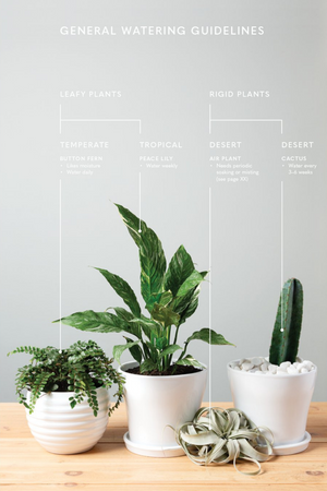 The Inspired Houseplant: Transform Your Home with Indoor Plants from Kokedama to Terrariums and Water Gardens to Edibles  By Jen Stearns