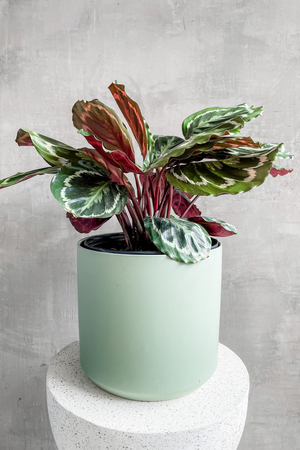 Accent Decor Kendall Pot in Sage