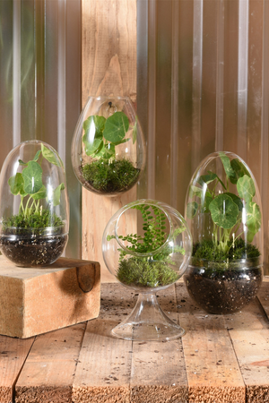HomArt Sole Wall Glass Terrarium 6278-0