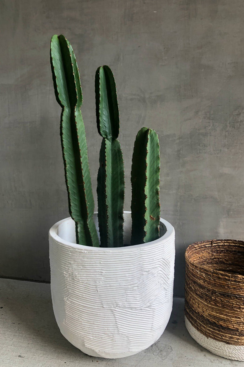 Accent Decor Greta Textured Pot