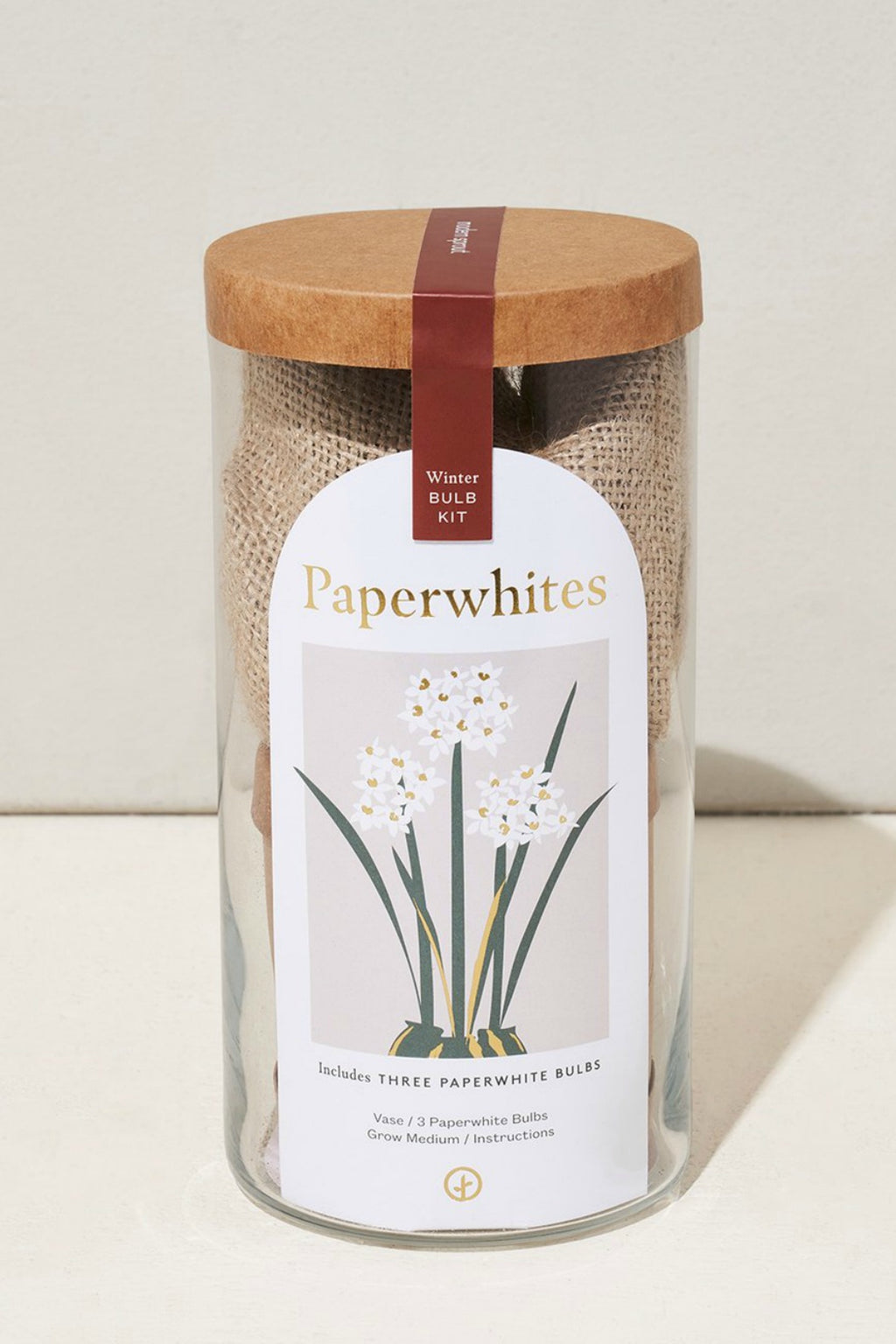 Modern Sprout Holiday Bulb Kit Paperwhites