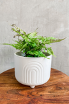 Flora Bunda Rainbow Ceramic Footed Planter