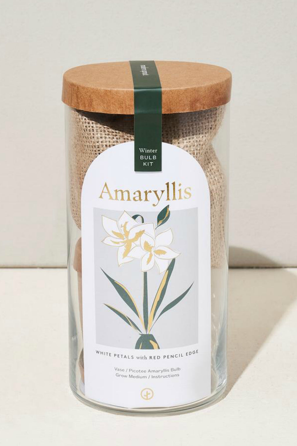 Modern Sprout Holiday Bulb Kit Amaryllis