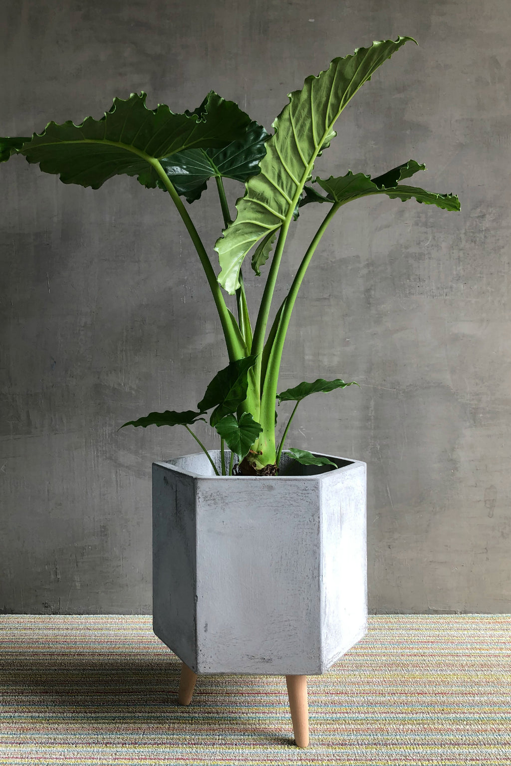 UMA Cement Smooth Hexagon Fiber Clay Planter