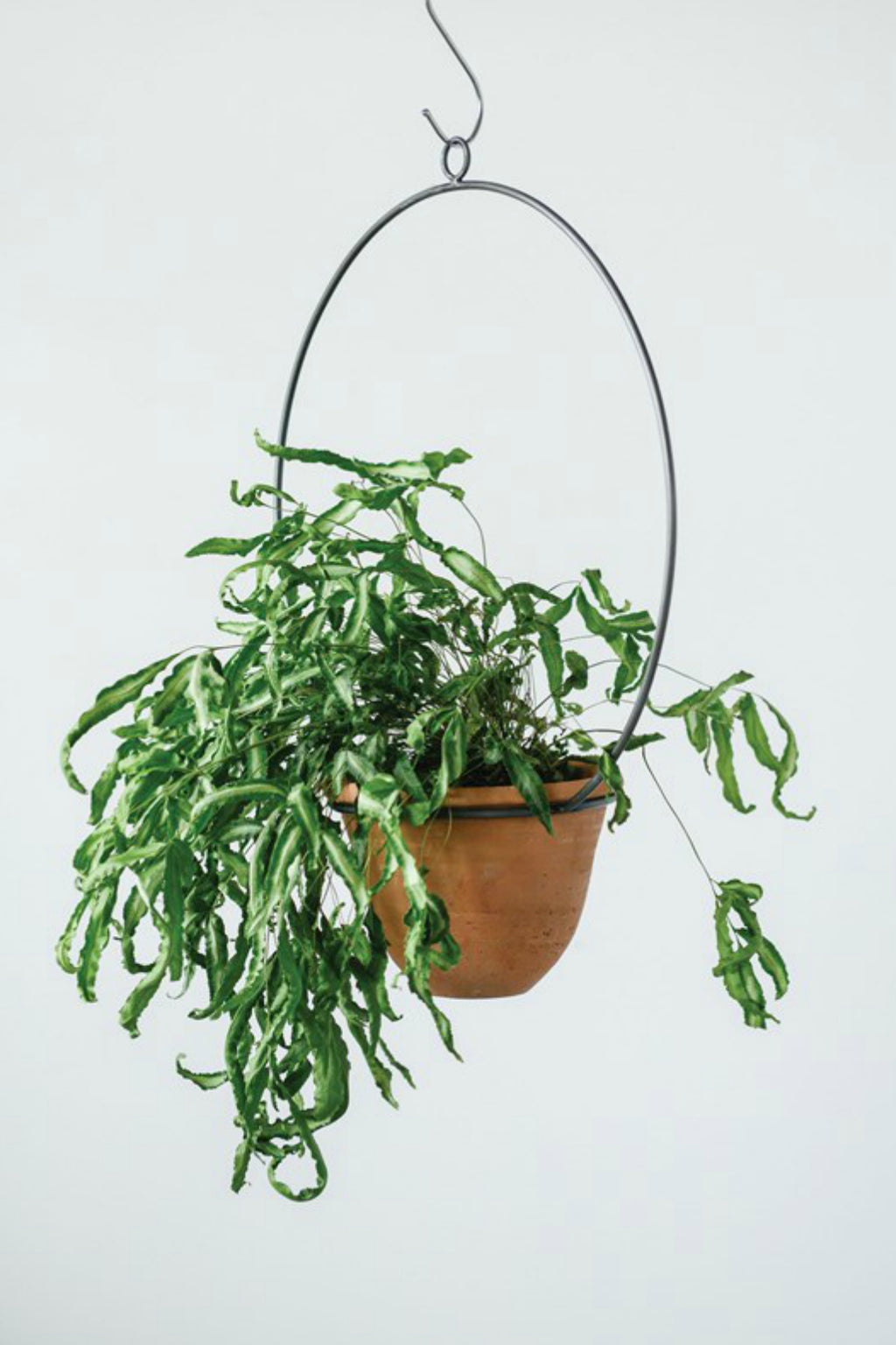 Hanging Terracotta Planter