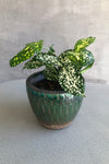 Creative Co-op Green Tiled Terracotta Planter  Edit alt text