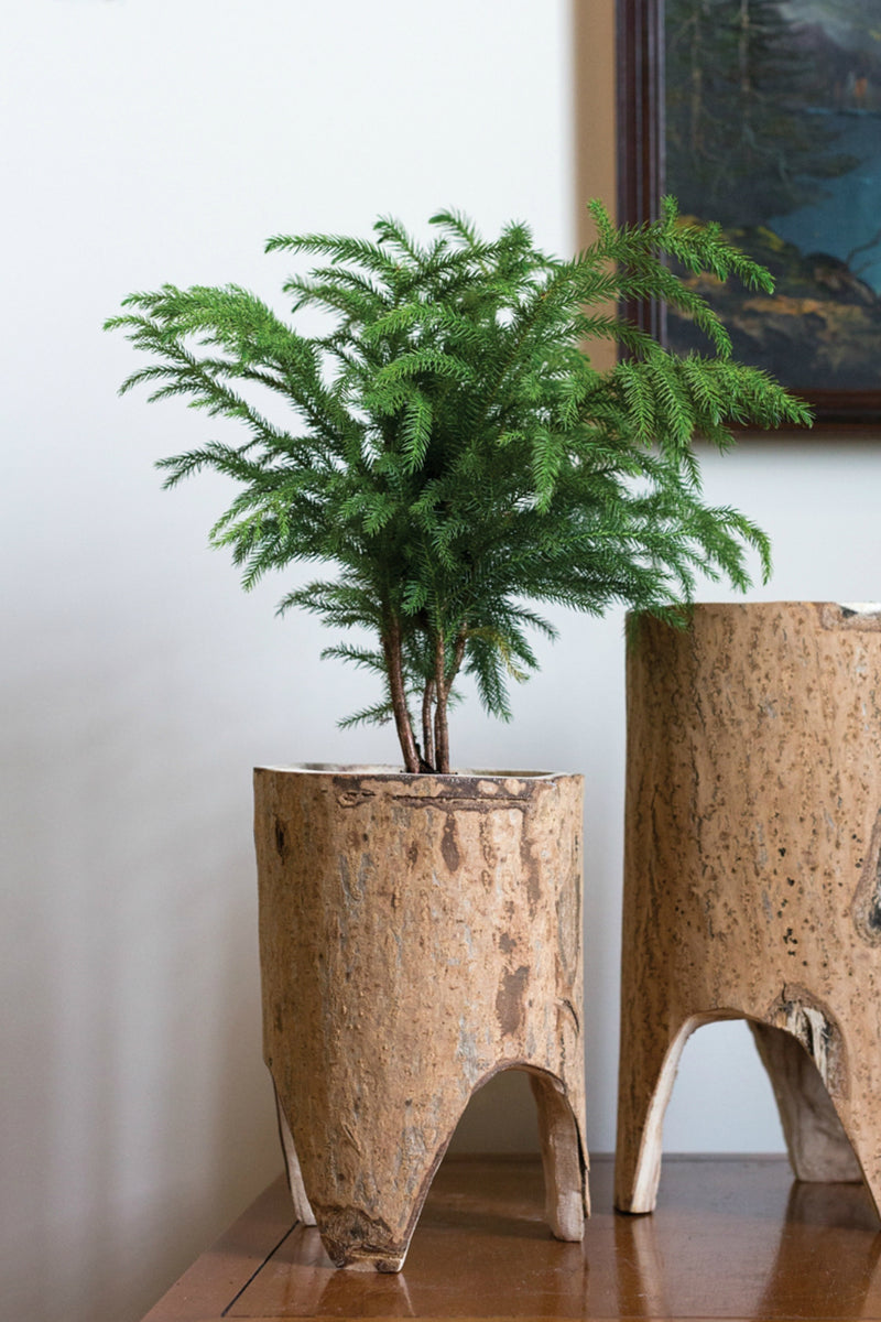 Accent Decor Forestland Planter